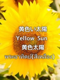 pictory_image_20190903_091217_1fedfd6609e640f398466195e412e71c