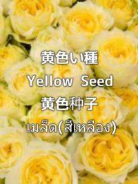 pictory_image_20200103_175232_a22fbb7d9f484c5b8935689ffe67ac75